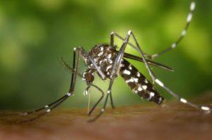 Mosquito Killer - Mosquito Biting