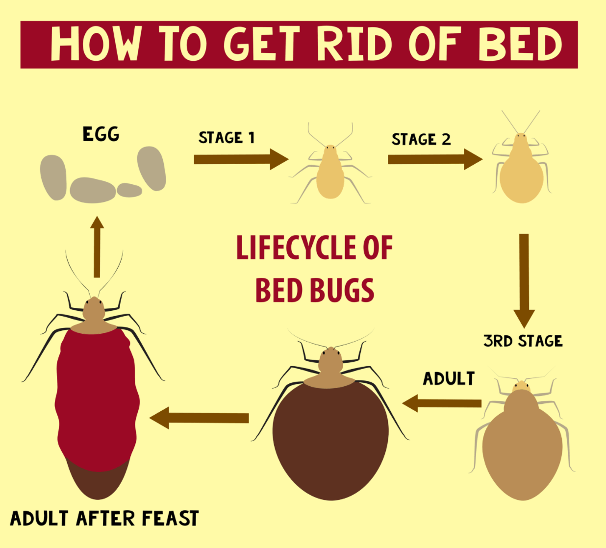 How to get rid of bed bugs infographic thepestkillers How to remove bed bugs from couch