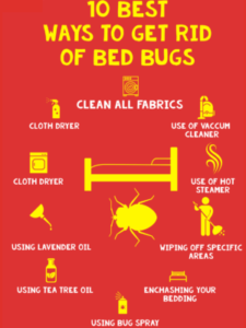 How to get rid of bed bugs infographic list