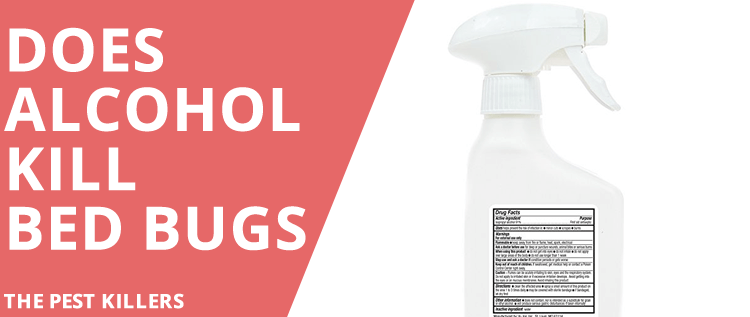 Bleach And Rubbing Alcohol To Kill Bed Bugs