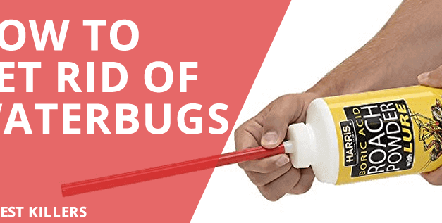 How to get rid of Waterbugs: Effective Home Remedies & Methods