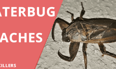 Water Bug vs Roach – Know the difference