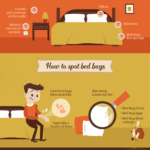 The Guide to Understanding Bed bugs