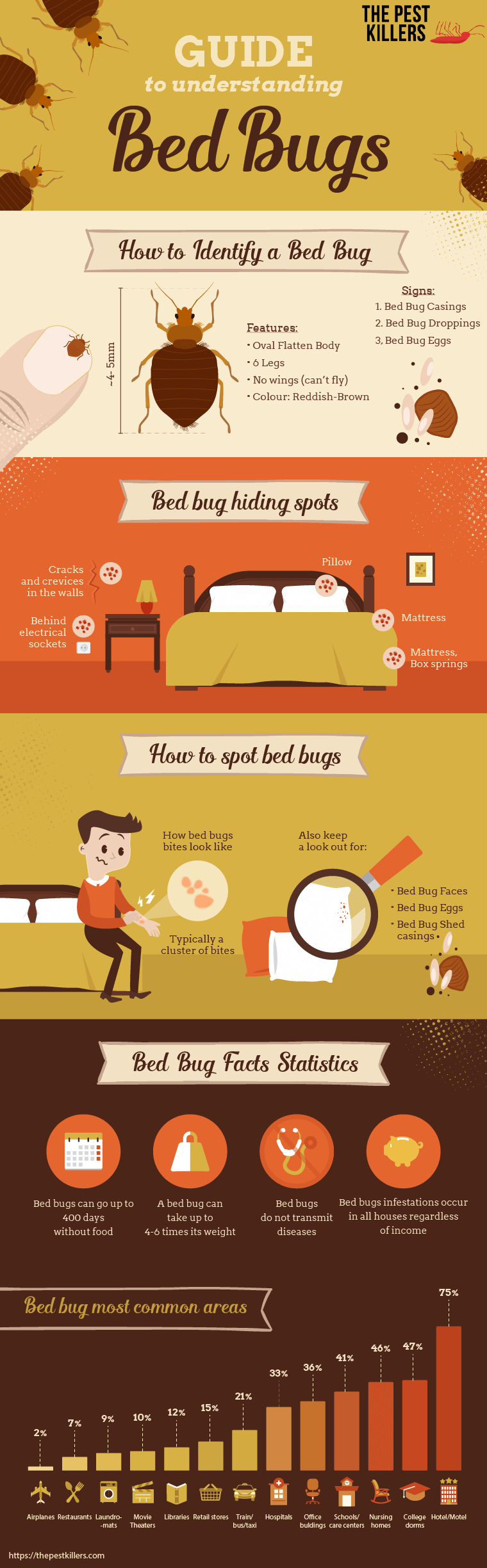 ThePestKillers Guide to Understanding Bed Bugs