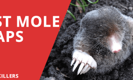 Best Mole Traps 2018 – Ethical Alternatives to get rid of moles