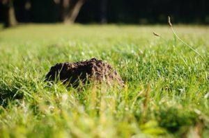 single mole hill