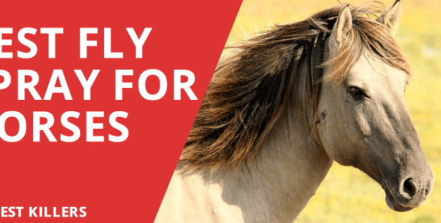 11 Best Fly Spray for Horses – Ultimate Guide 2018