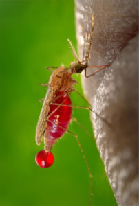 Gnat Bites: Symptoms, Treatment and Preventions - ThePestKillers