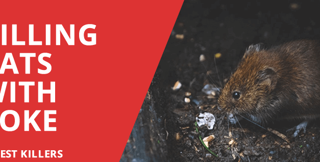 Killing Rats with Coke – Does this alternative really work?